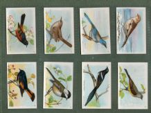 RareTrade cards set Useful Birds of America 1924 Church-Dwight